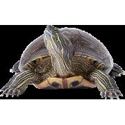 Товары для черепах