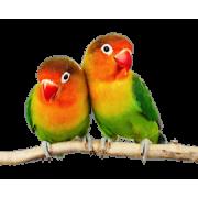 Товары для попугаев